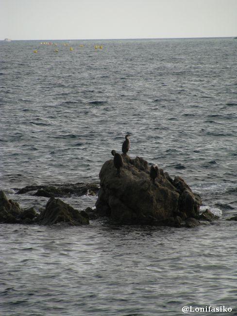 Aves en Sa Palomera Blanes Costa Brava