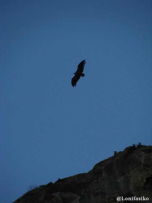 Foz Lumbier Aves Buites Fotos