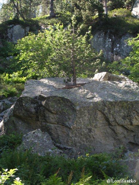 Val d'Aran Granito