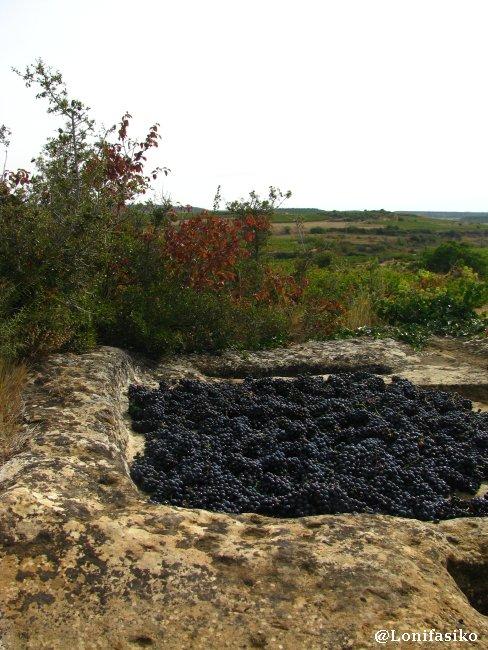 Pileta del lagar llena de uva