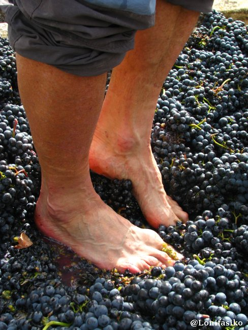 Pisando uva como un auténtico profesional