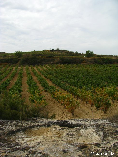 Viñedos de Labastida, en la Rioja Alavesa