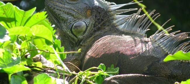 Parque Nacional de Tortuguero: Santuario de biodiversidad animal en Costa Rica