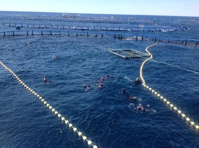 Nadando en la piscina donde habita el atún rojo del Mediterráneo