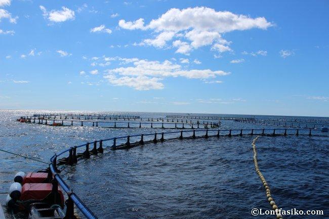 Piscinas en alta mar para la acuicultura del atún rojo del Mediterráneo