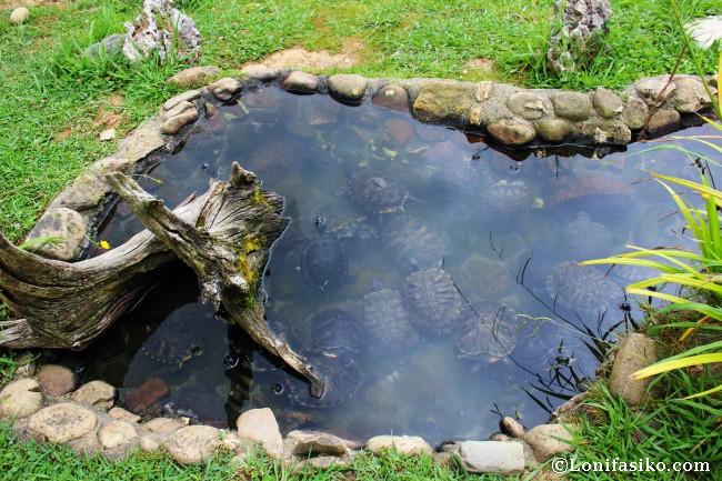 Karpin abentura con ni os parque de animales en karrantza for Estanque de tortugas