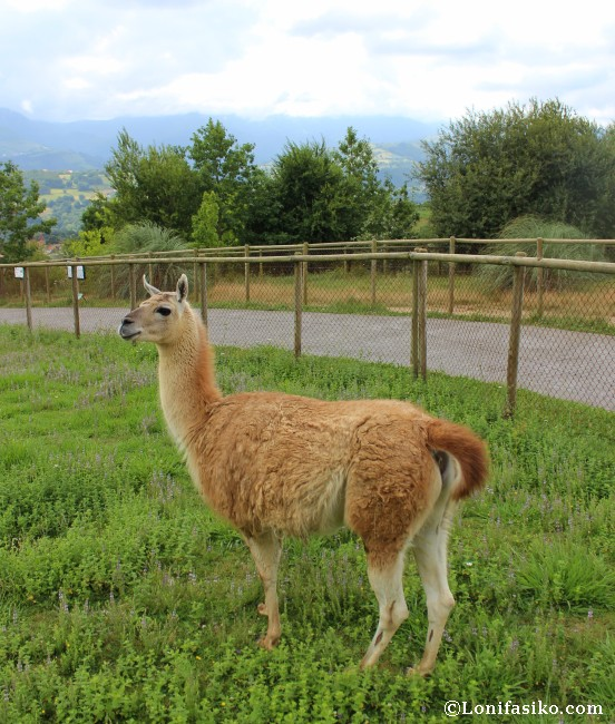 Karpin Abentura Fotos animales parque