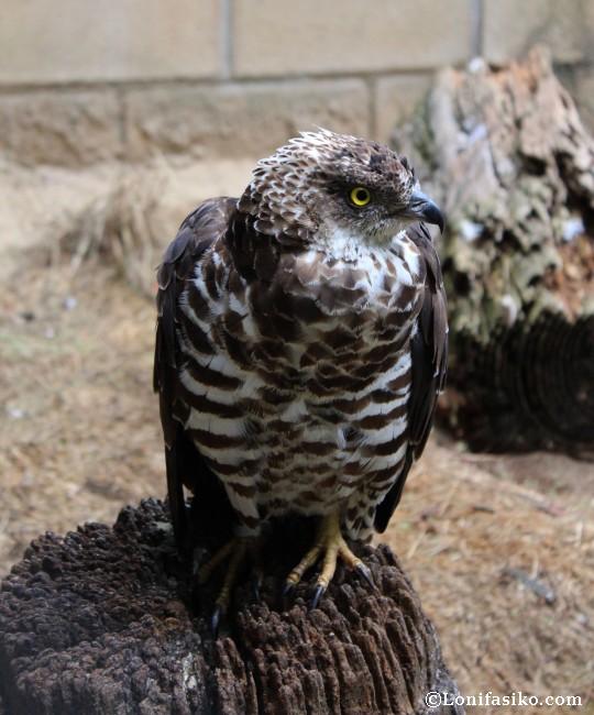 Karpin Abentura fotos animales aves