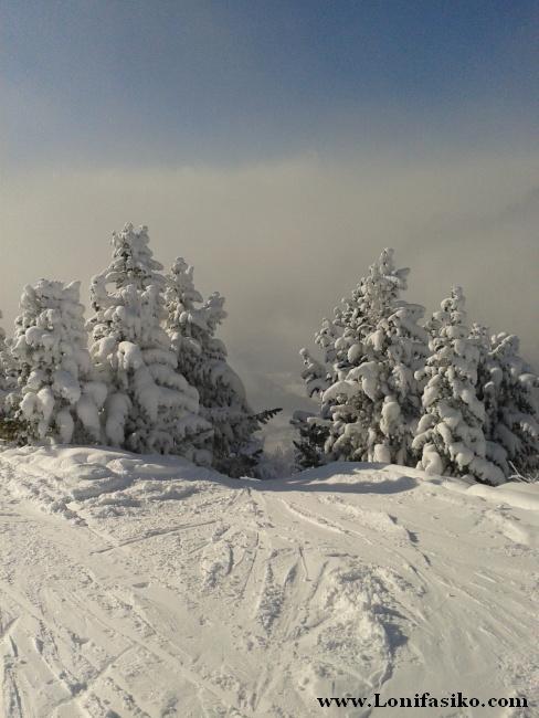 Si te gusta esquiar fuera pista entre pinos, Patscherkofel ofrece muchas posibilidades