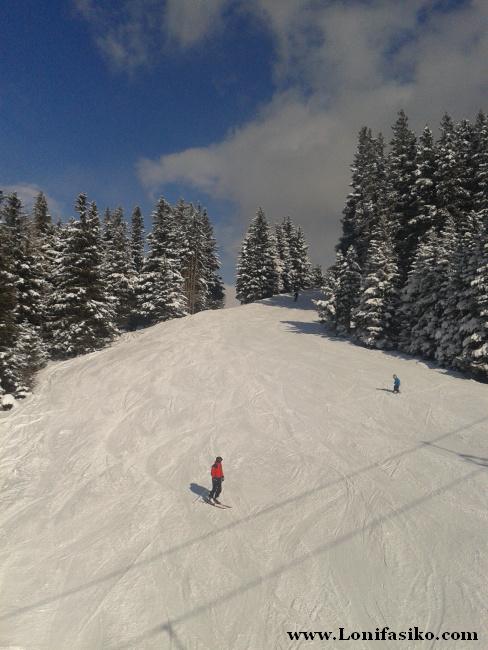 Muchas pistas de la estación de esquí de Patscherkofel discurren entre pinares