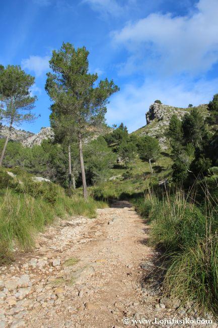 La pista o sendero que sube hacia Ses Sínies