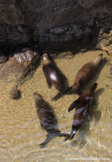 Animales Parque La Magdalena Santander
