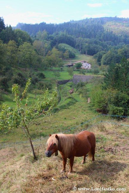 Caballos junto a la vía verde