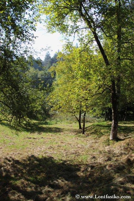 Humedal en la zona de Barnaola, rico en biodiversidad, especialmente anfibios