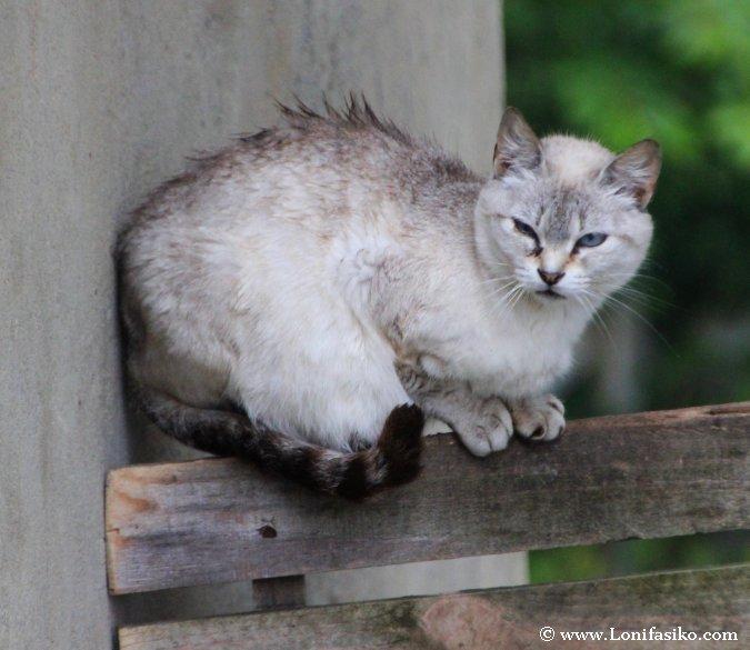 Gatos que se refugian del orbayu en Sotres