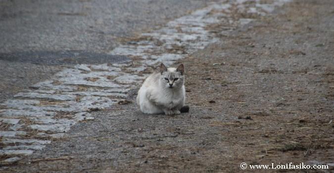 La vida de los gatos en Sotres