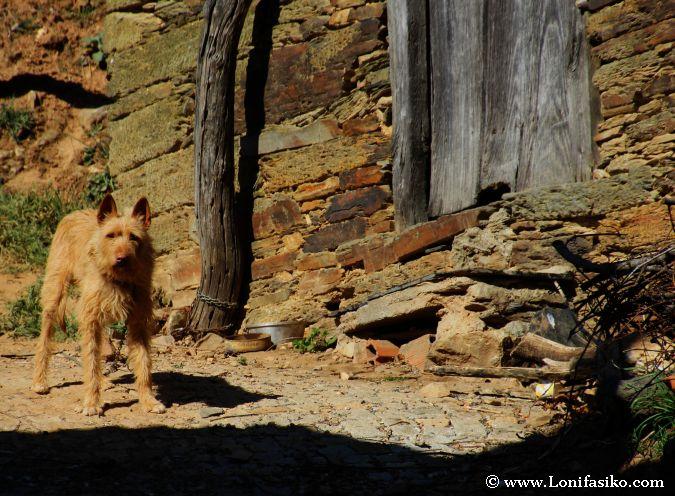 Perros en Portugal
