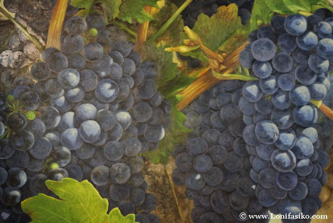 Cuadros relacionados con uvas y el mundo del vino