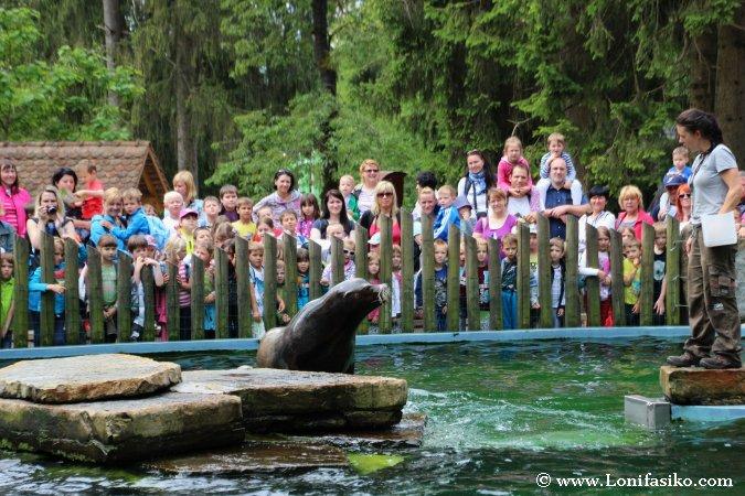 Espectáculo de leones marinos en zoo