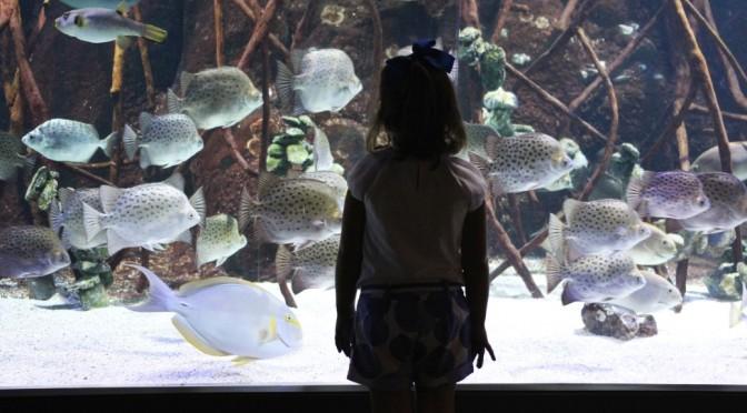 Aquarium de Donostia, inmersión marina entre tiburones y ballenas