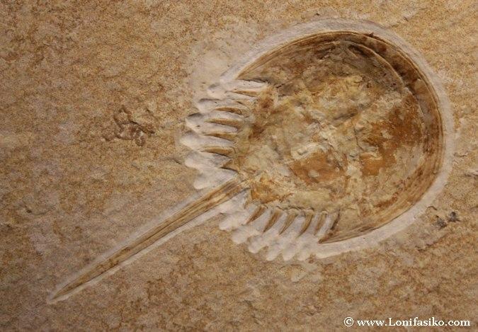 Fósiles marinos en el Aquarium de Donostia-San Sebastián