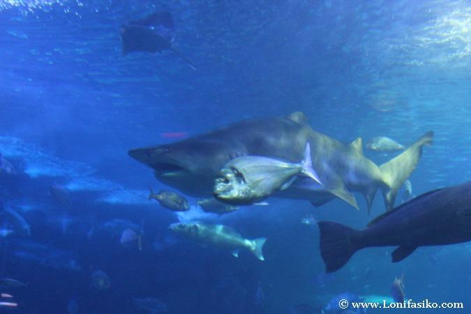 Nadar entre tiburones en el Aquarium de Donostia-San Sebastian