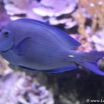 Peces de colores en el Aquarium