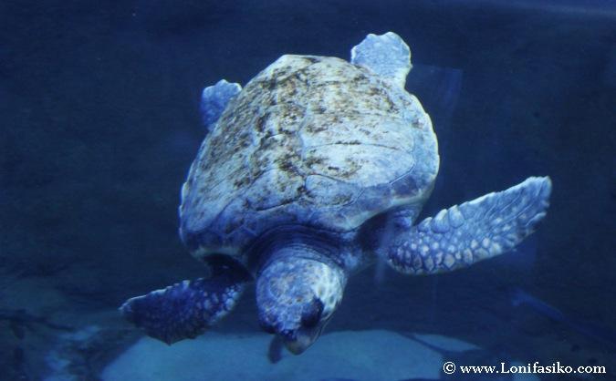 Tortugas en el Aquarium de Donostia San Sebastian