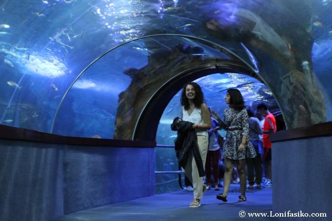 Visitar túnel panorámico oceanario aquarium de Donostia San Sebastian