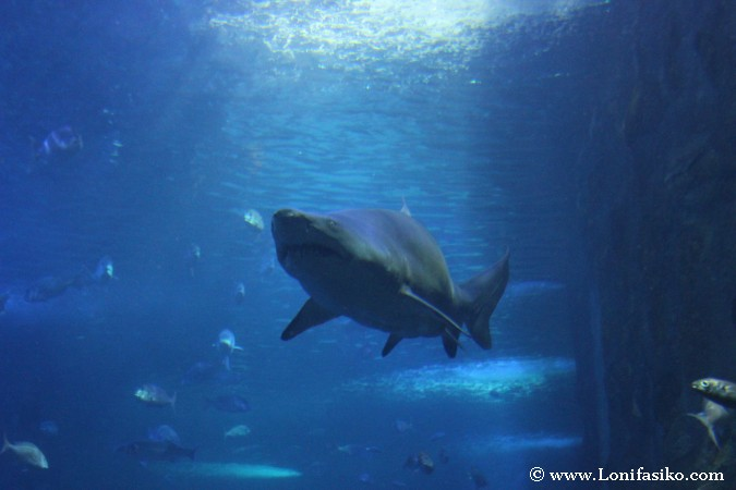 Ver tiburones en el Aquarium de Donostia-San Sebastián