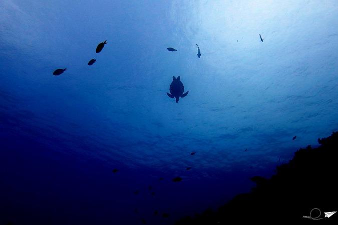 Sitios de buceo en Filipinas