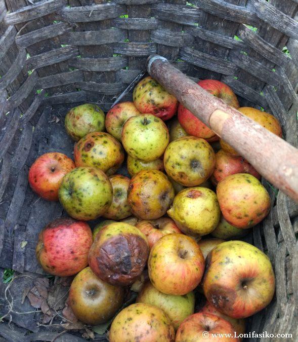 Manzana para elaborar sidra vasca