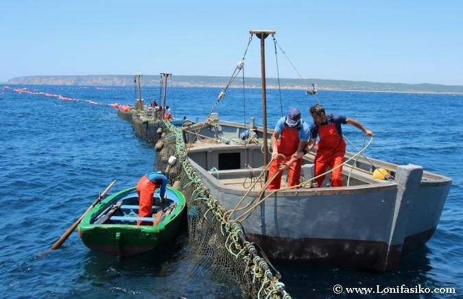 Levantá atún rojo de almadraba Barbate