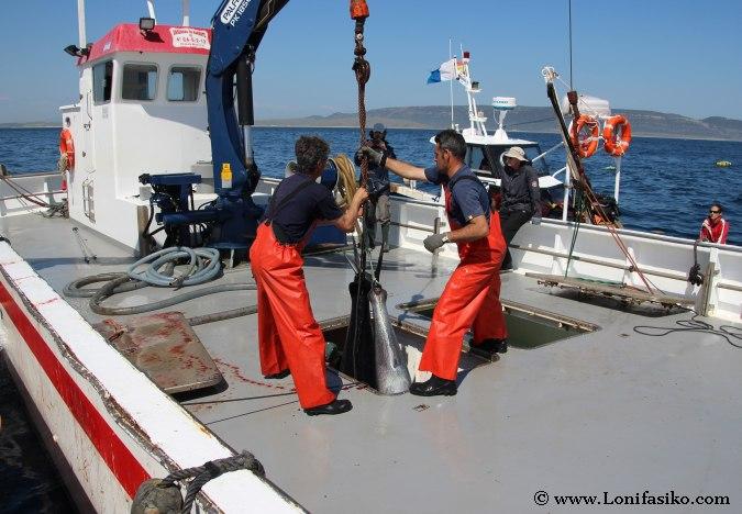 Pesca atún rojo almadraba Cádiz Fotos