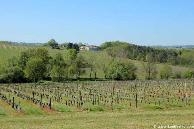 Viñedos Bergerac enoturismo Dordogne