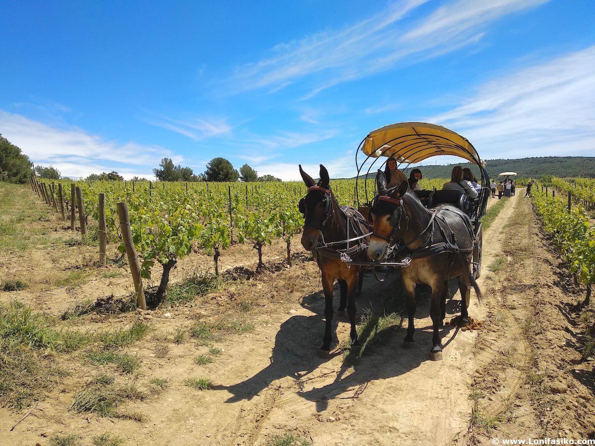 paseo entre viñedos penedés enoturismo