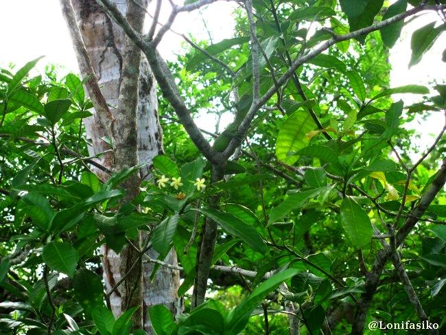 Tortuguero Costa Rica fotos animales