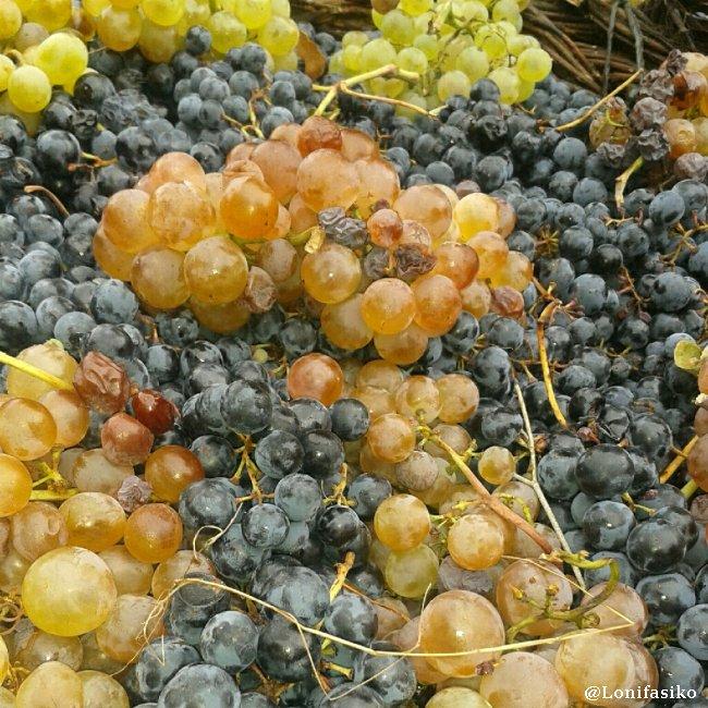 Octubre, época de vendimia, tanto en Rioja Alavesa como en Toro
