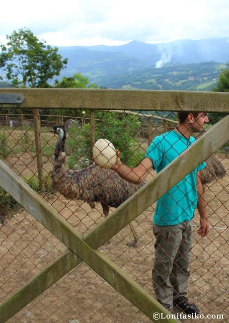 Huevo avestruz fotos Karpin Abentura