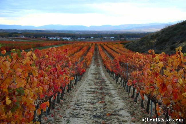 Visitar La Rioja en otoño