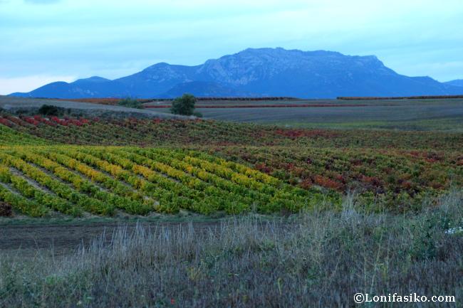 Otoño entre viñedos en La Rioja