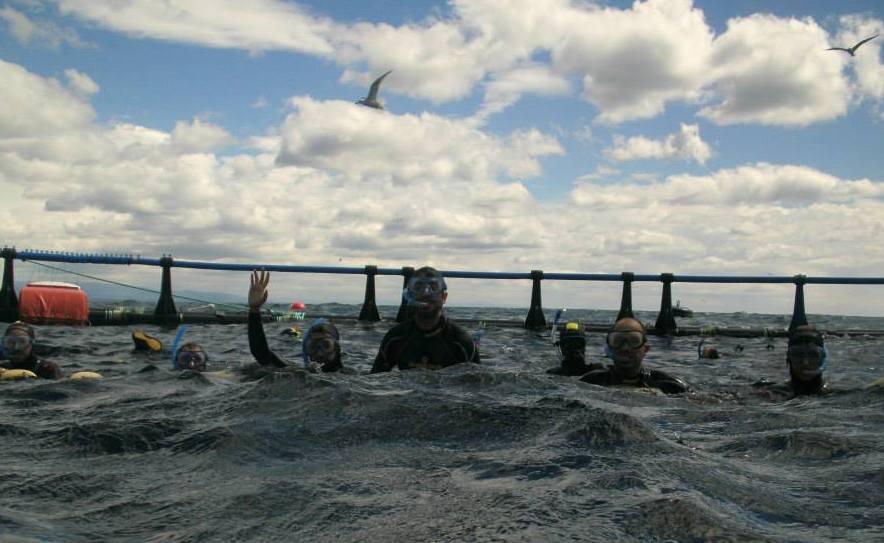 Nadar entre atunes, una experiencia mediterránea auténtica