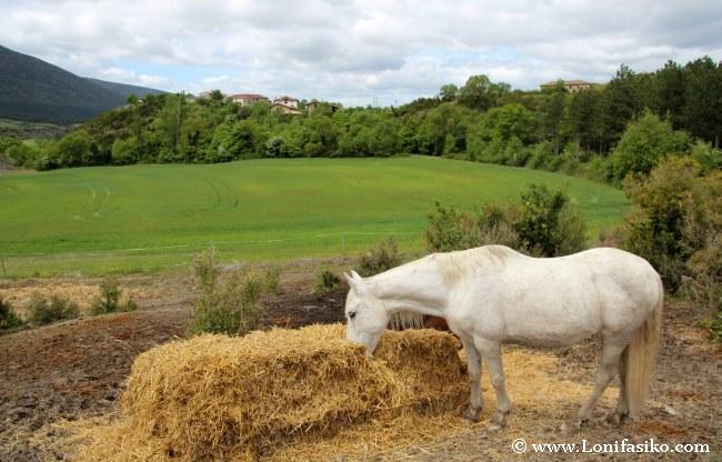 Montar a caballo en Navarra