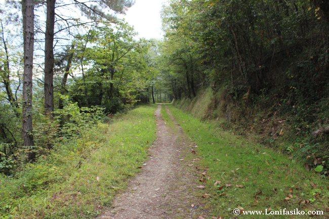 Zona de bosque y trazado del tramo Liernia-Mutiloa