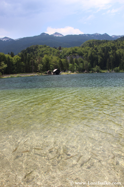 Aguas cristalinas Lago Bohinj