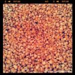 Maiz autóctono en el molino de Errotabarri