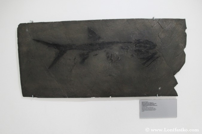 Espacio de geología del museo del Castillo de Bled