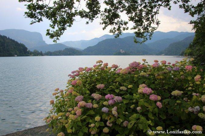 Tranquilidad en la orilla del lago Bled