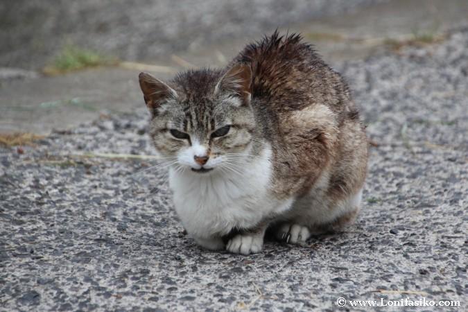 Colonia de gatos en Sotres