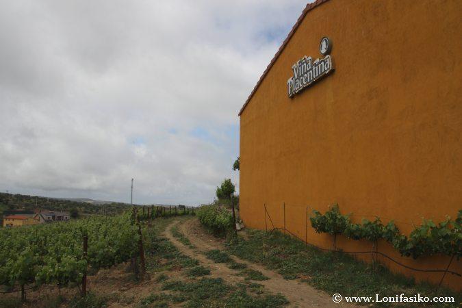 Bodega-Viña-Placentina-Vino-Plasencia-TBMPlasencia-001